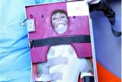 footage from Iran's state-run English language Press TV showing the monkey that was launched into sp