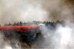 Fighting the fire near Yad VaShem