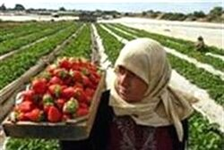 Gaza Fields