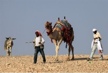Bedouin roam the desert