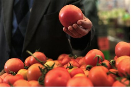 Israeli tomatoes are highly prized around the world