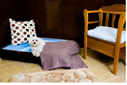 Kelevland pet hotel room
