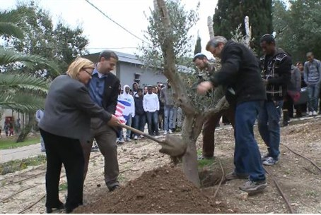 Ambassador Shapiro plants olive tree