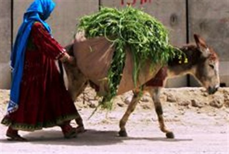 A woman with a donkey carrying grass